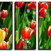 Spring Beauty Triptych Series Art Print