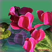 Spring Cyclamen Art Print