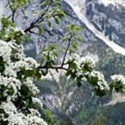 Spring In Alps Art Print by Sola Deo Gloria