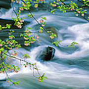 Spring Middle Prong Little River Art Print