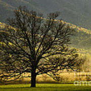 Spring Morning In Cades Cove - D003803a Art Print