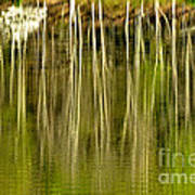 Spring Morning Reflections Art Print