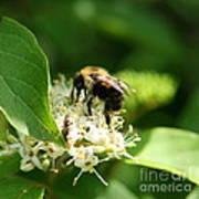 Spring Pollination Art Print