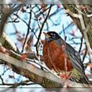 Spring Robin Art Print