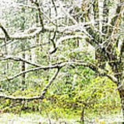 Spring Snow Along Williams River Scenic Byway Art Print