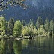 Spring View Of The Merced River Art Print