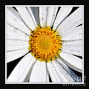 Square Daisy - Close Up 2 Art Print