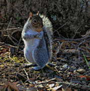 Squirrel At Base Of Tree - C2074b Art Print