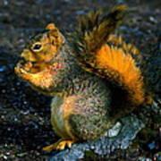 Squirrel At Riverfront Park Art Print