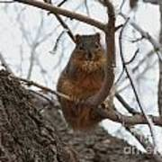 Squirrel Eating In The Frost Art Print