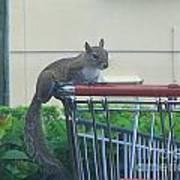 Squirrel Going Shopping Art Print