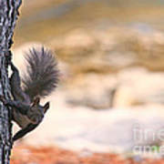 Squirrel Sitting On The Tree  Art Print