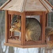 Squirrel Sneaking Food Art Print