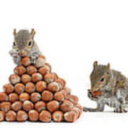 Squirrels And Nut Pyramid Art Print