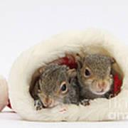 Squirrels In Santa Hat Art Print