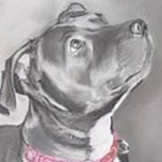 Staffordshire Terrier  Art Print