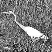 Stalking Egret Art Print