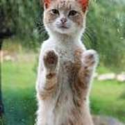 Standing Cat Art Print