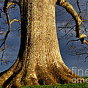 Standing Strong Oak Tree And Storm Clouds Art Print