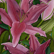 Star Gazer Lilies Art Print by Vikki Wicks