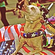Star Spangled Dog Art Print