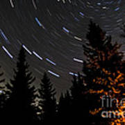 Star Trails Above Spruce Tree Line Art Print by Darcy Michaelchuk