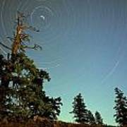 Star Trails, North Star And Old Douglas Art Print