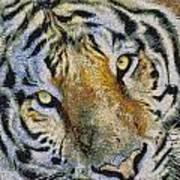 Starry Tiger Art Print