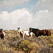 Steens Wild Horses Art Print