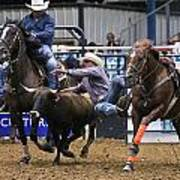 Steer Wrestling  Art Print