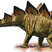 Stegosaurus Armatus, A Prehistoric Era Art Print