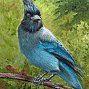 Stellar Jay Art Print by Dee Carpenter