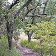 Steps Trail Art Print