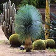Still Life With Cactus Art Print