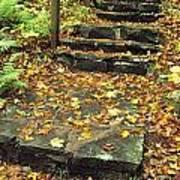 Stone Stairway In Forest, Cape Breton Art Print