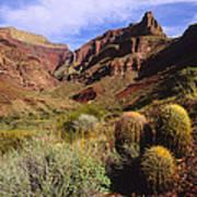 Stonecreek Canyon In The Grand Canyon Art Print