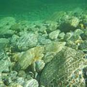 Stones Under The Water Art Print