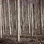 Straight Trees Art Print