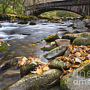 Stream In The Great Smokie Mountain National Park Art Print