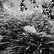 Streched Trees In Black And White Art Print
