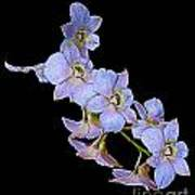 String Of Light Blue Orchids Art Print