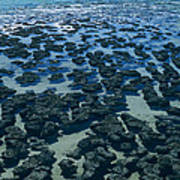 Stromatolites Art Print by Dirk Wiersma