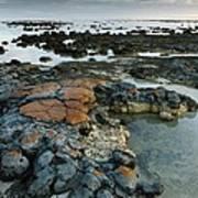 Stromatolites In Australia Art Print