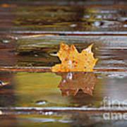Stuck Maple Leaf Art Print