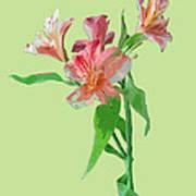 Stylish Florals Art Print