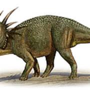 Styracosaurus Albertensis Art Print