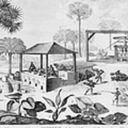 Sugar Production In The West Indies Art Print