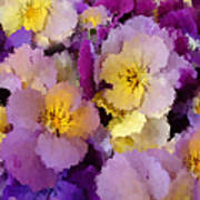 Sugared Pansies Art Print