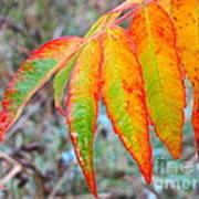 Sumac Leaves After The Rainfall Art Print