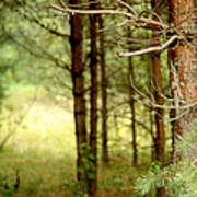 Summer Forest. Pine Trees Art Print by Jenny Rainbow